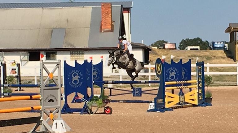 Linköpings horse show.