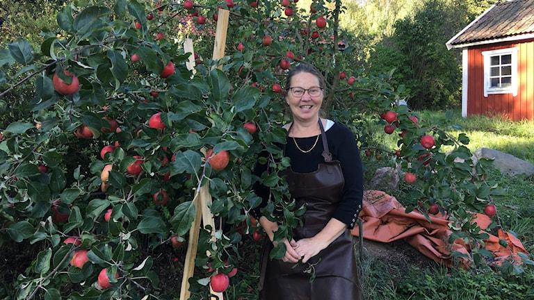 Britt-Marie Wihlborg som tillverkar äppelmust i Kolmården.