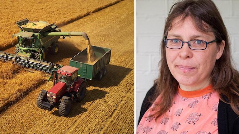 kollage: Traktor och skördetröska/Eva Johansson.