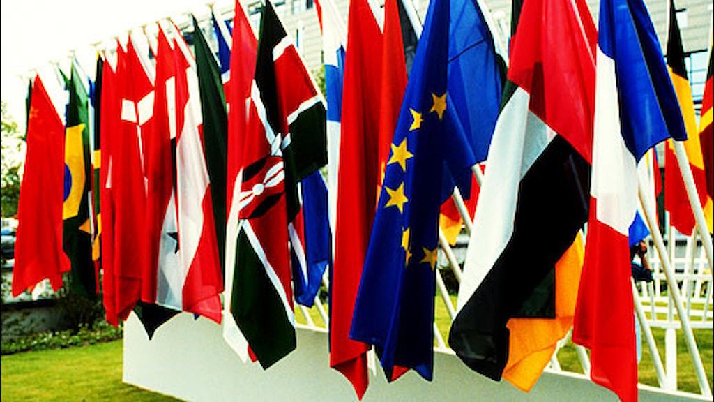 Flaggspel med EU-flaggan i förgrunden. SVT bild.