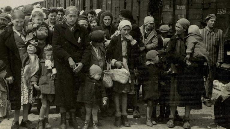 Deportation jüdischer Frauen und Kinder ins Konzentrationslager Auschwitz 1944 (Foto: TT)