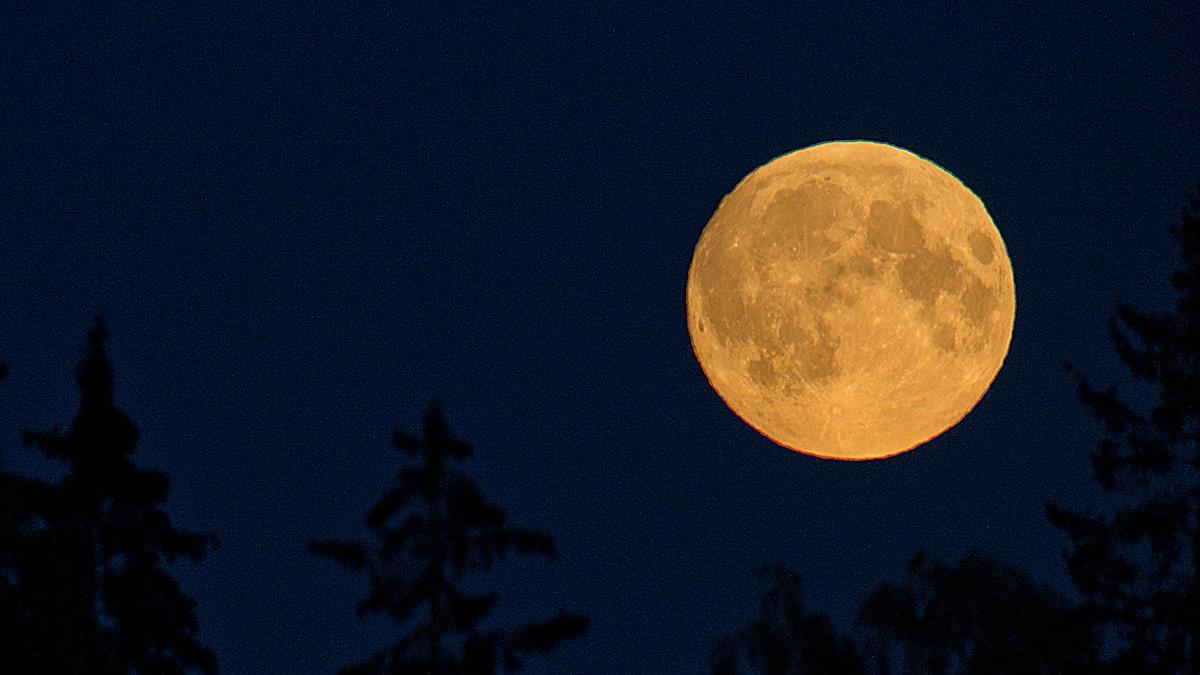 Måne. Foto Jon Olav Nesvold. TT nyhetsbyrån.
