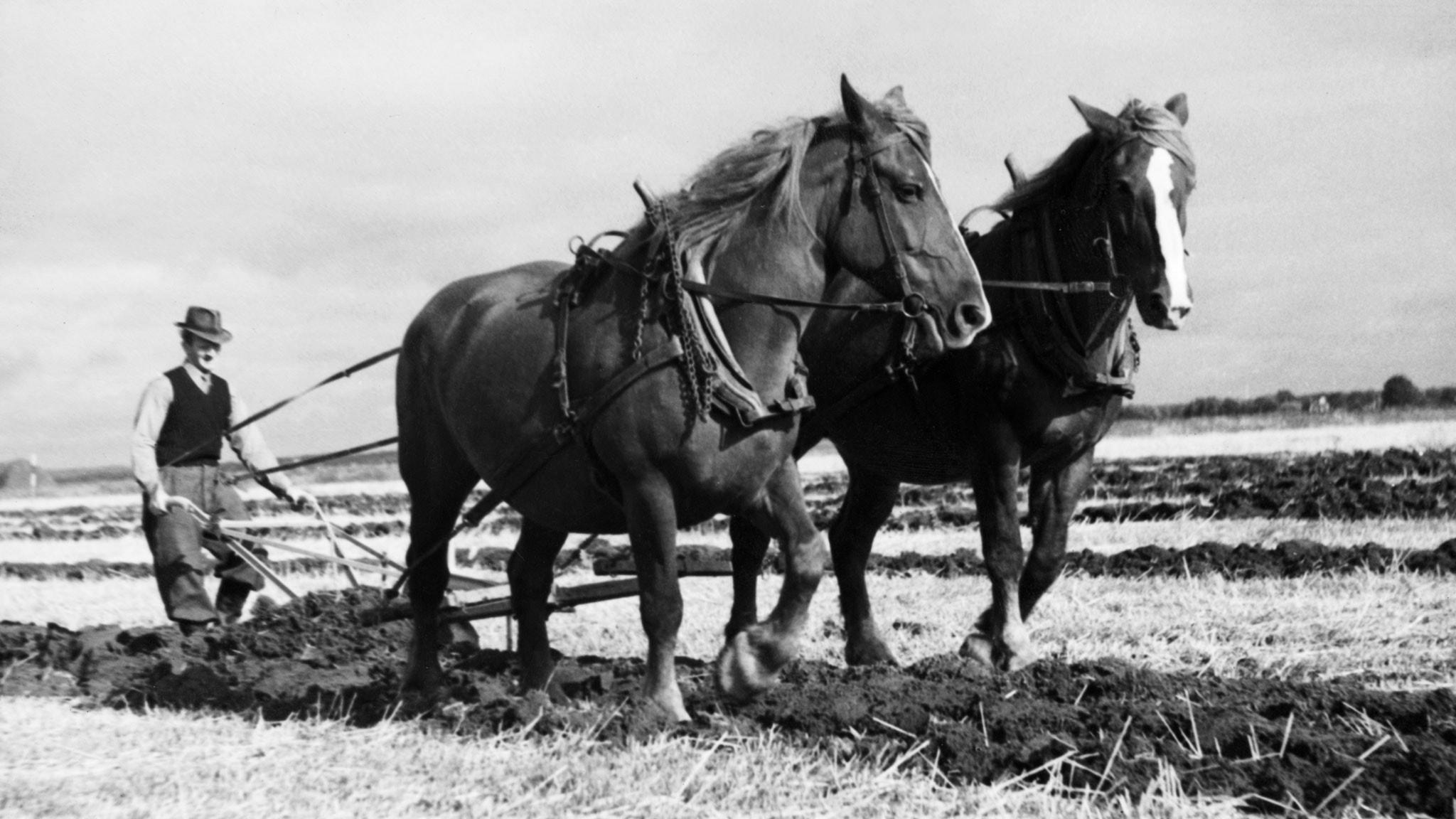Kraftmätning med plogen 1941