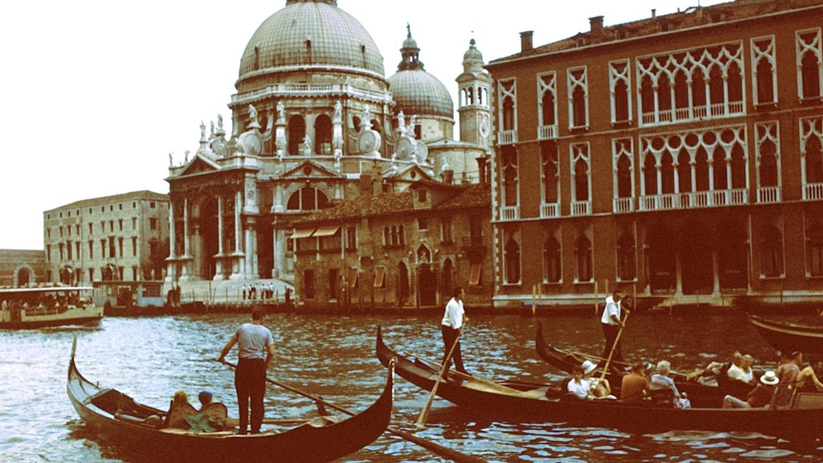 Gondol i Venedig. SVT Bild.