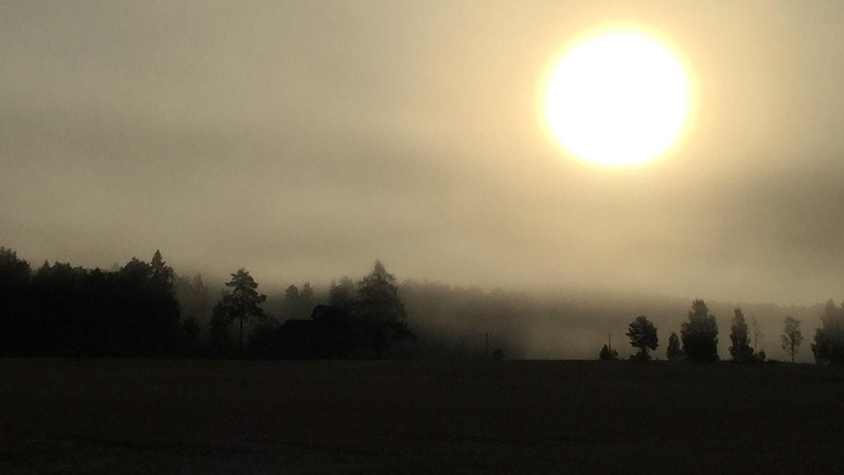 En skog och en sol