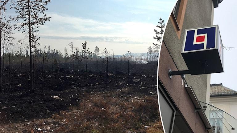 Skogsbrandsområdet i Torgås och en skylt vid Dalarnas försäkringsbolag.