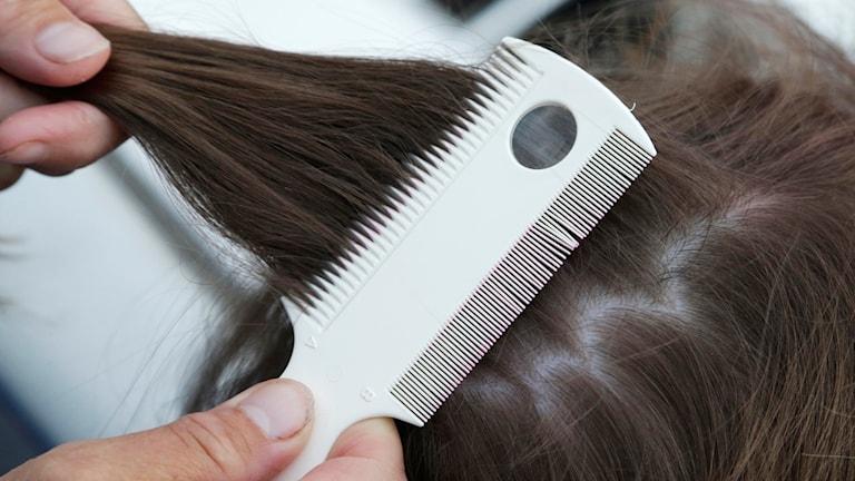Kammar hår