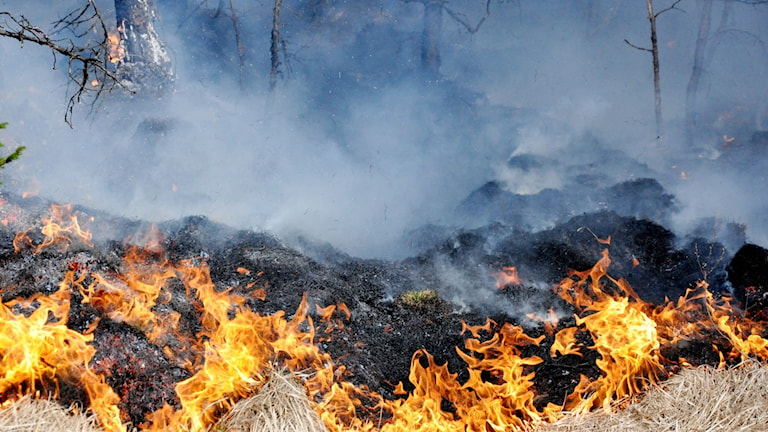 Gräsbrand ute i naturen.