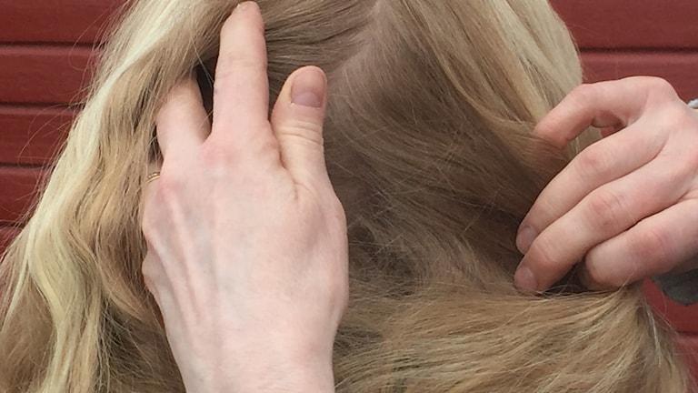 Fingrar som letar efter löss i långt ljust hår.