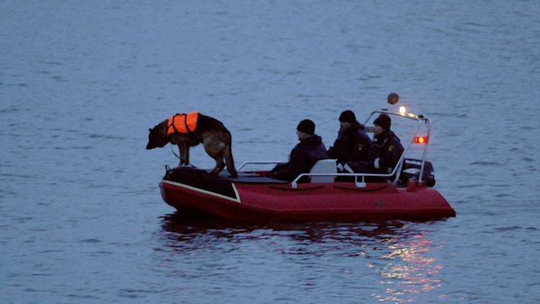 En båt med räddningspersonal och hund som söker i vatten.