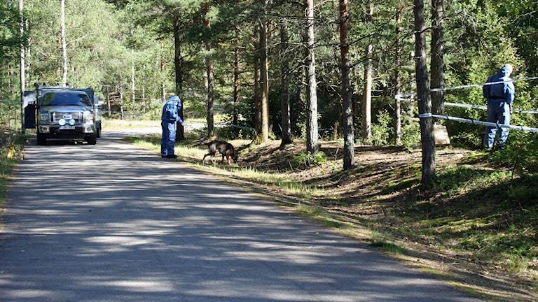Polisens tekniker och en polishund undersöker ett skogsområde.