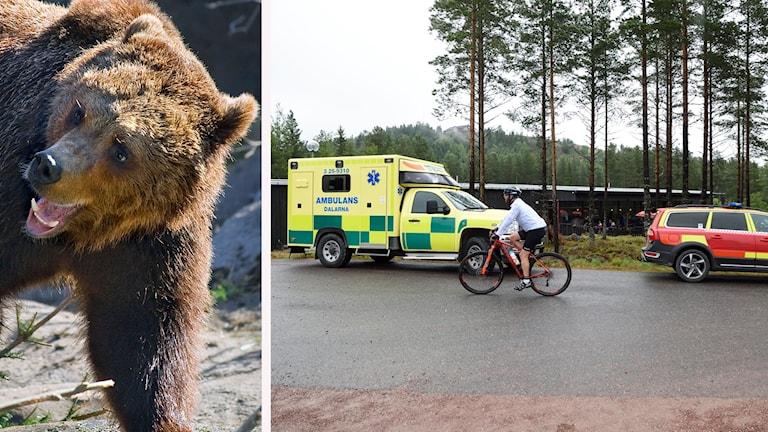 En björn och en bild på en ambulans på plats i Orsa