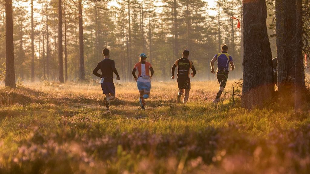 Fyra löpare i skogen