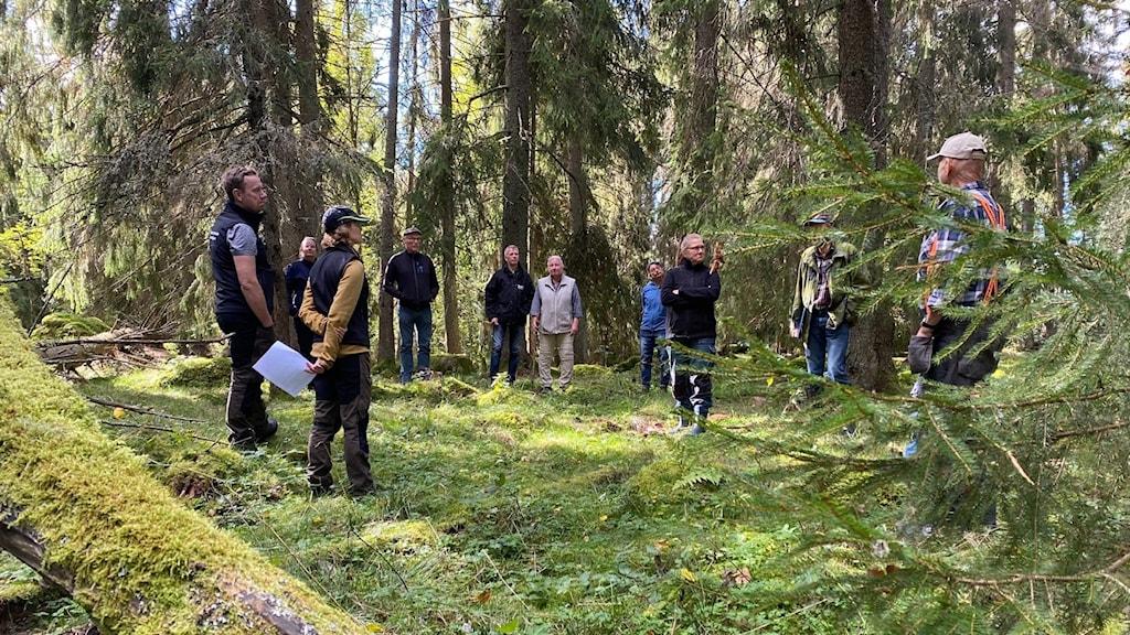 Ett tiotal personer står i ring i skogsglänta
