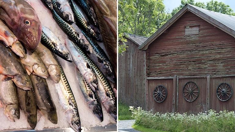 Gamla lador skulle kunna användas på nytt genom att odla fisk och grönsaker med ny metod.