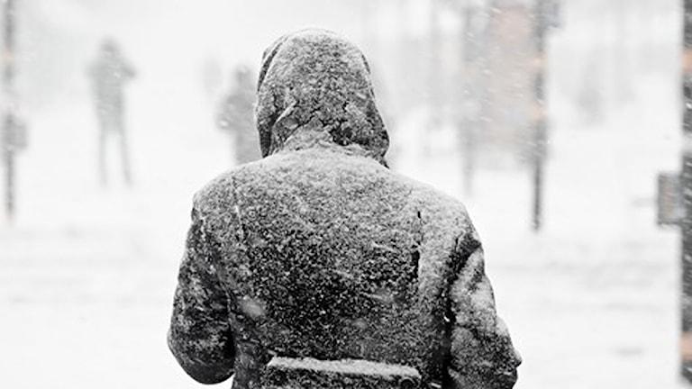 SMHI utfärdar klass 1-varning för snöfall. Foto: TT