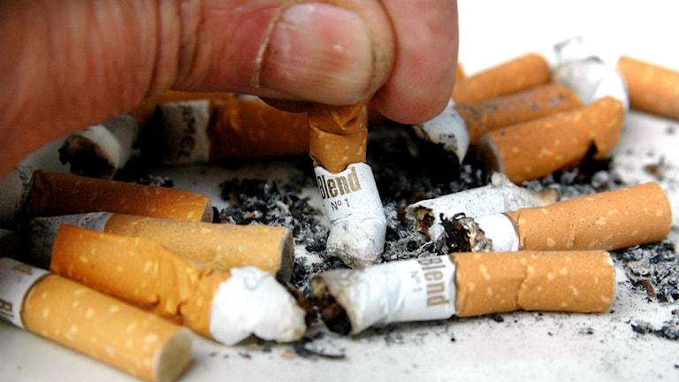 Cigaretter. FOTO: Stefan Gustavsson / SvD / TT