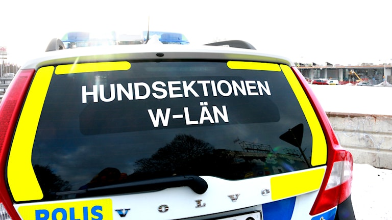 Polishund i Dalarna. FOTO: Sofie Lind/Sveriges Radio.