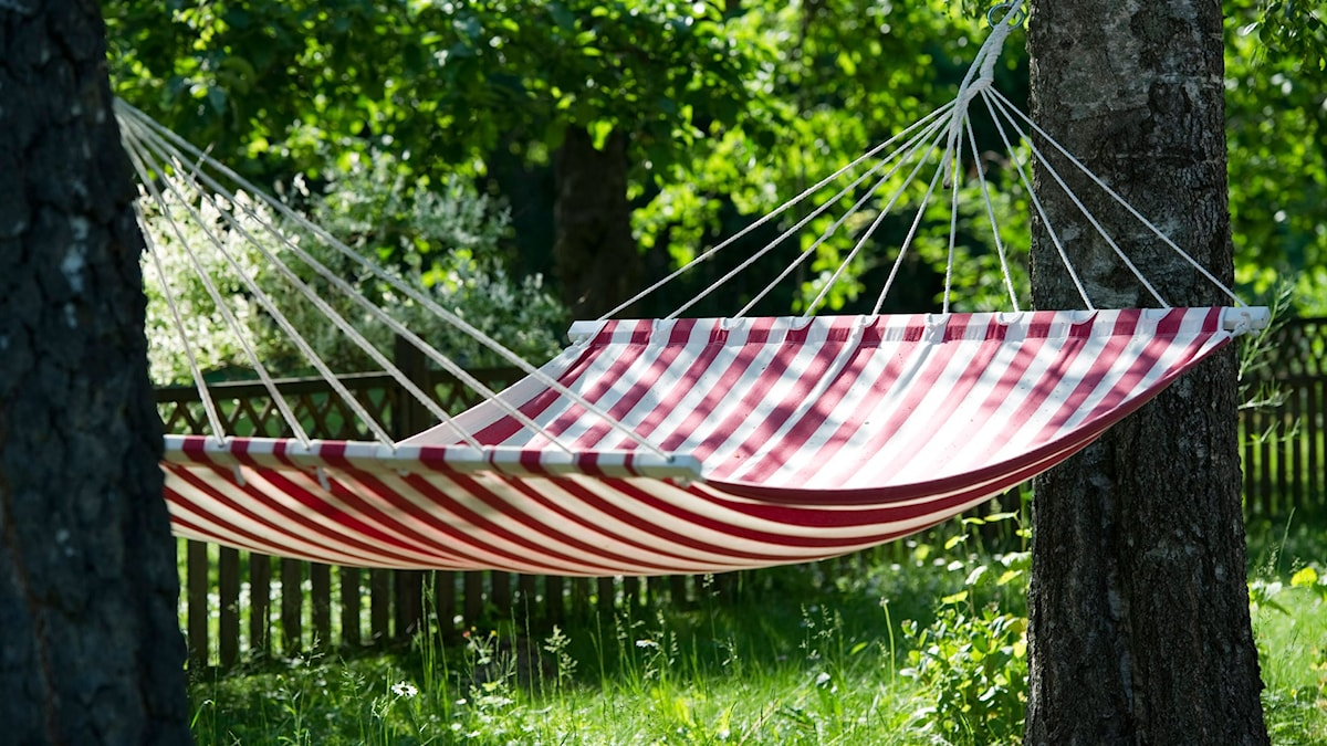 Har du en ledig dag att ta ut? Kanske. I år ligger nationaldagen på en lördag. Då kan du få en extra dag till hängmattan. Foto: Fredrik Sandberg/TT.