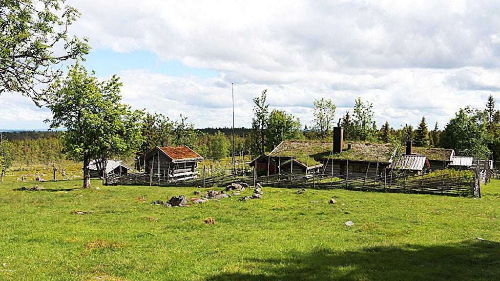 En fäbod i Södra Sjörisberget strax utanför Malung. Foto: Sofie Lind/Sveriges Radio.