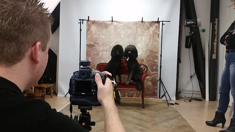 I dag, när det är Djurens Dag, så har fotografen Mia Spange öppnat studion och skänker alla pengar från husdjursfotograferingen till djurambulansen i Dalarna. Peggy och Isa poserar framför kameran.