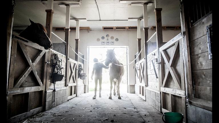 Bilden visar en flicka och hästar i ett stall.
