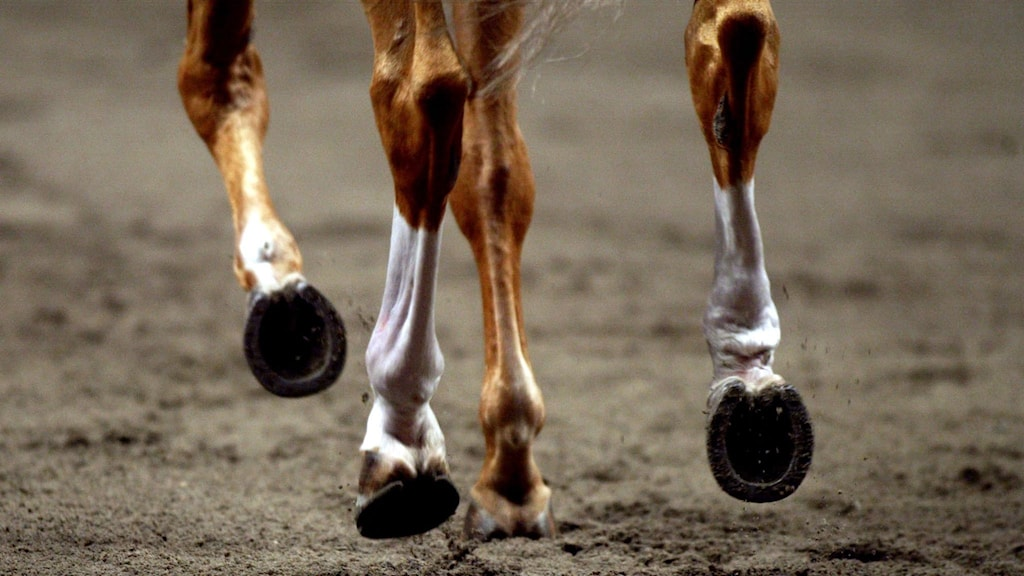 Hästben som rör sig framåt.