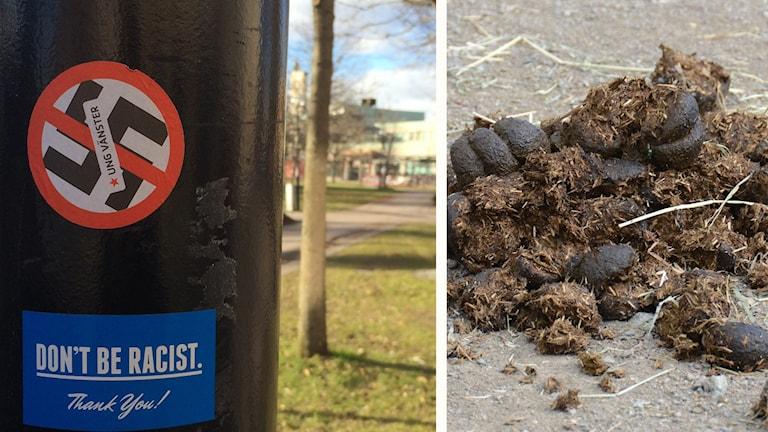 Bild från klistermärke från Ung vänster på stolpe i Liljeqvistska parken samt bild på hästgödsel.