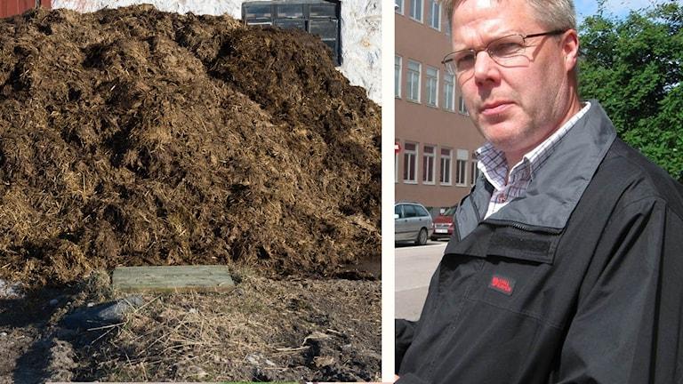 Montage av dels gödselstack, dels Leif Lindström, vänsterpartistiskt kommunalråd i Borlänge.