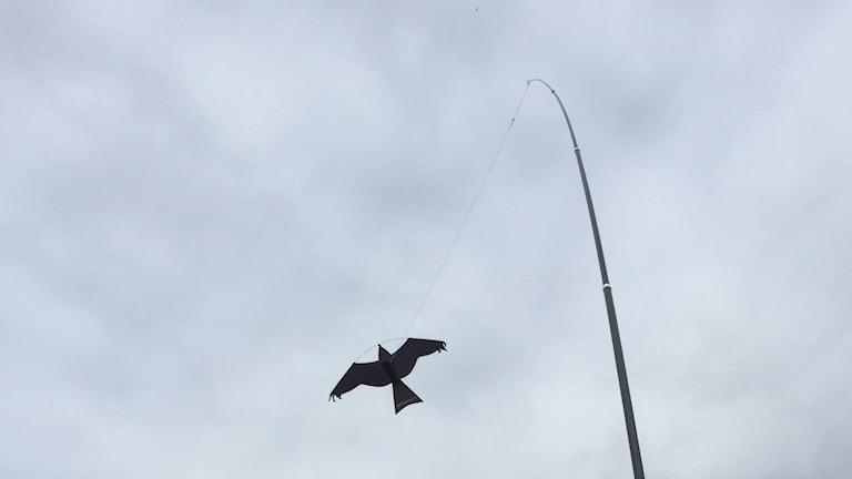 Bild på fågelskrämman