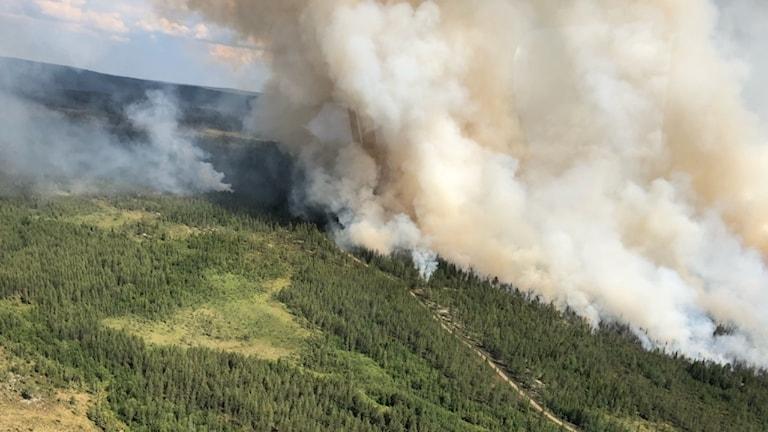 En flygbild på skogsbranden norr om Trängslet.