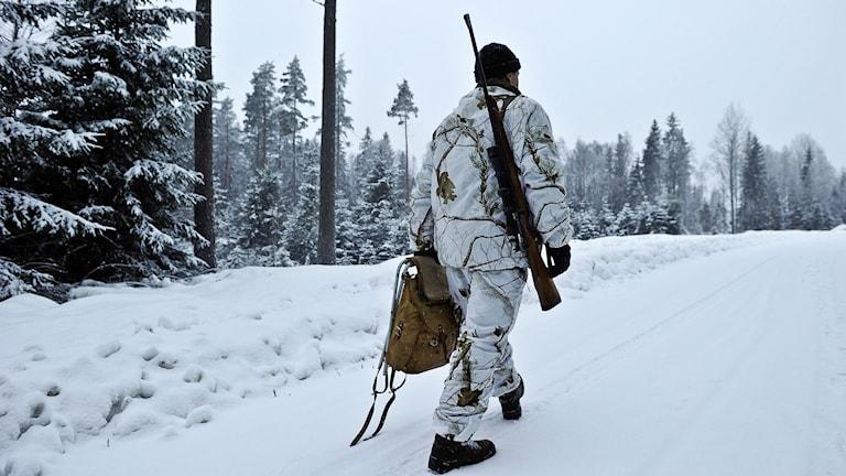 Vargjägare går skogen på vintern