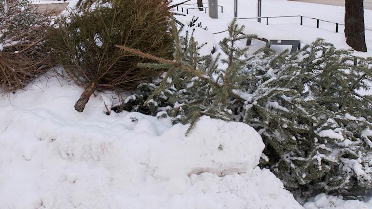 Julgranar som ligger kastade på marken