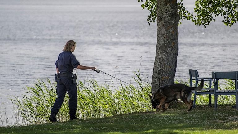 Polis letar med hund.