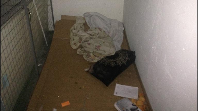Sovplats av kartong och en filt i en källare i Tjärna Ängar