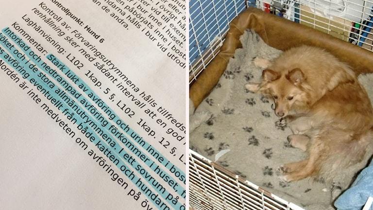En hund och en bild från djurskyddsinspektionernas protokoll