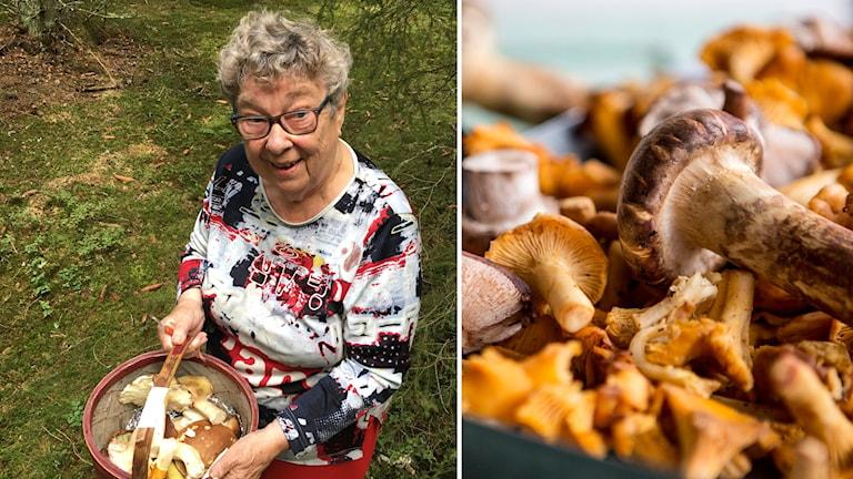 Karin Olausson och svampar.