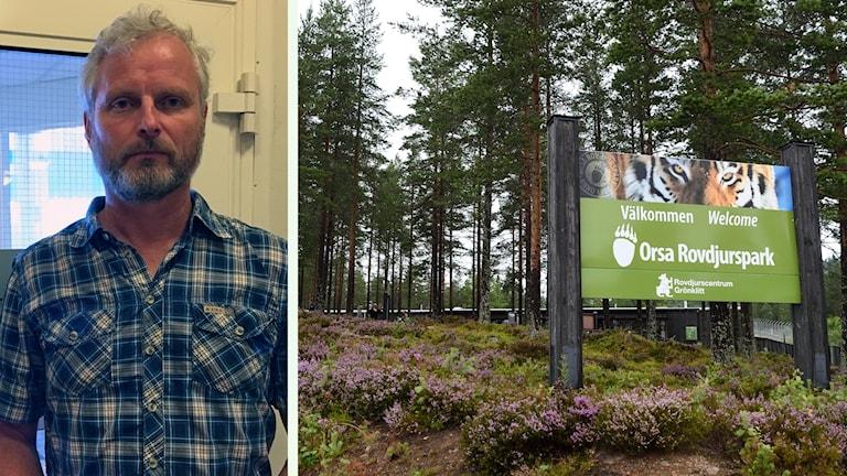 Paul Keenan som är arbetsmiljöinspektör och en bild från Orsa Rovdjurspark
