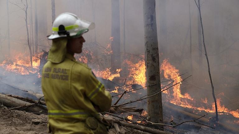 Brandman övervakar skogsbrand i Australien januari 2020.
