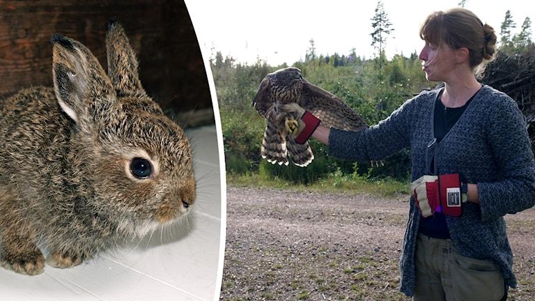 En kanin och en kvinna som håller en fågel på ena handen.