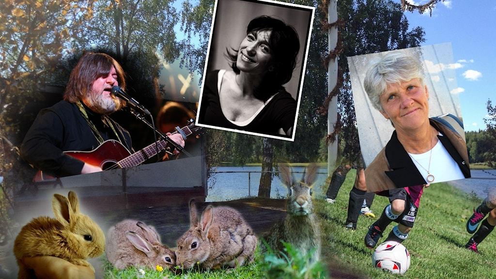 Ett bildcollage av Ebbot Lundberg, Pia Sundhage, Andrea Edwards, kaniner och Skenshyttans bygdegård.