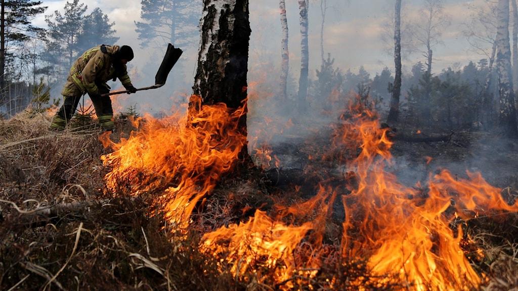 en brandman står vid ett brinnande träd och slår mot lågorna i gräset på marken.