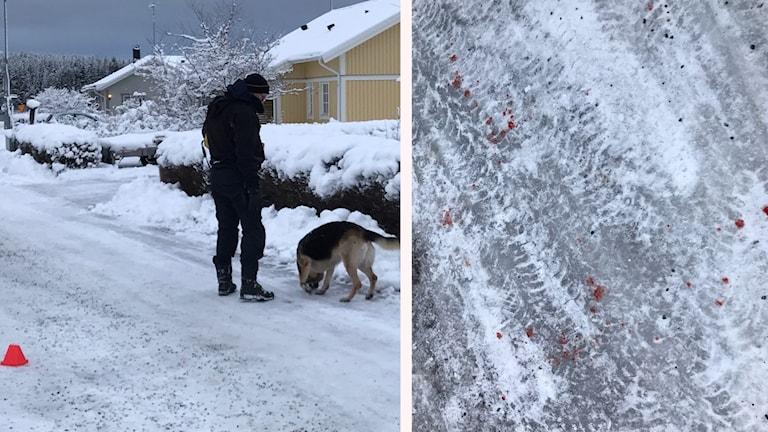 En polis med hund och blodfläckar