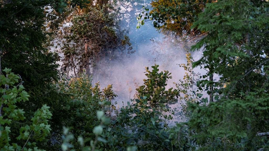 Brandrök i skogen,