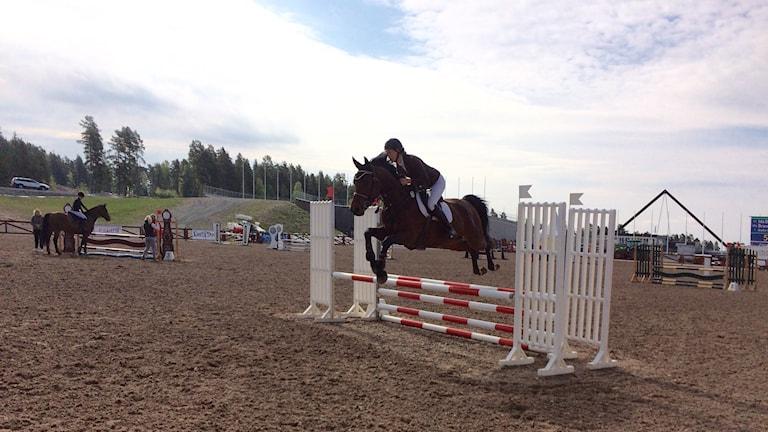 Dalahoppet, en av Sveriges största tävlingar, är igång för 24:e gången.