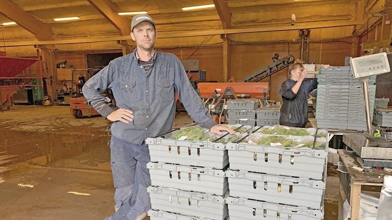 Jordbrukare i lager framför pallar med grönt.