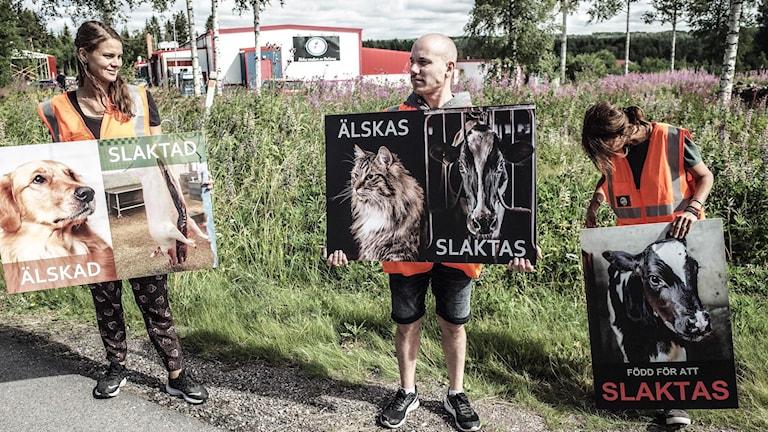 Personer demonstrerar för djurens rätt utanför Ickholmens slakteri i Rättvik.