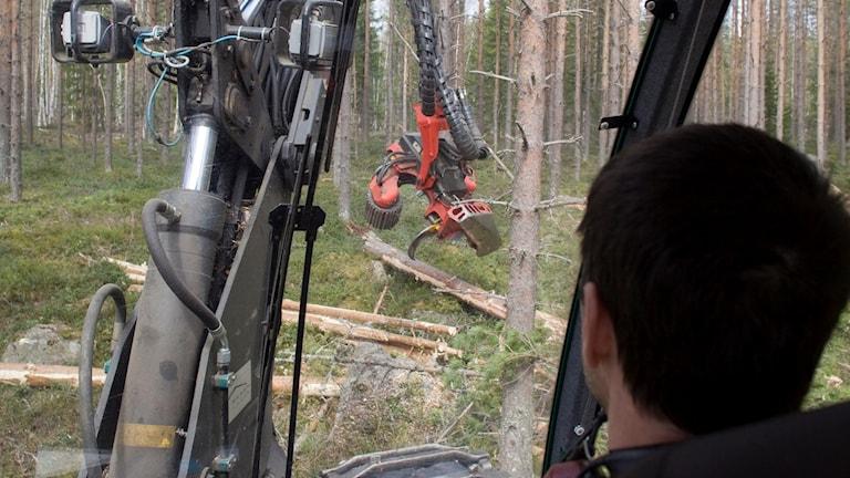 Med nyutbildade, oerfarna maskinförare riskerar skogsentreprenörer att gå back.