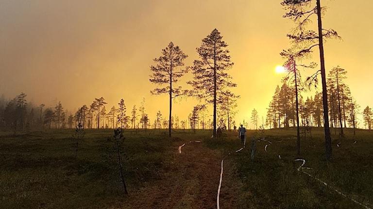 Bild inifrån avbränningen vid branden vid Trängslet.