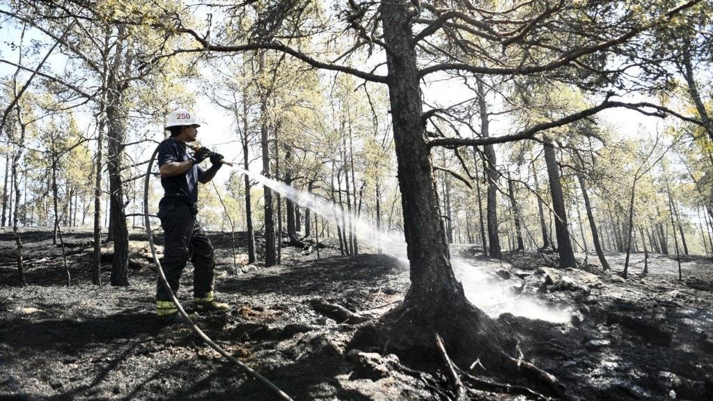 en brandman som sprutar vatten på ett träd